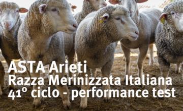 Asta ON-LINE Arieti di razza Merinizzata Italiana 2020